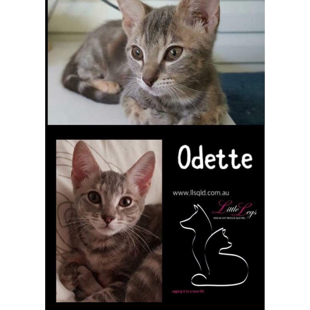 Photo of Odette