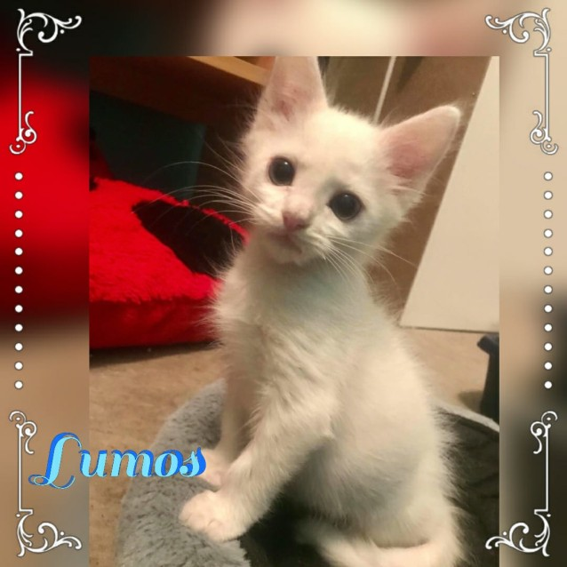 Photo of Lumos