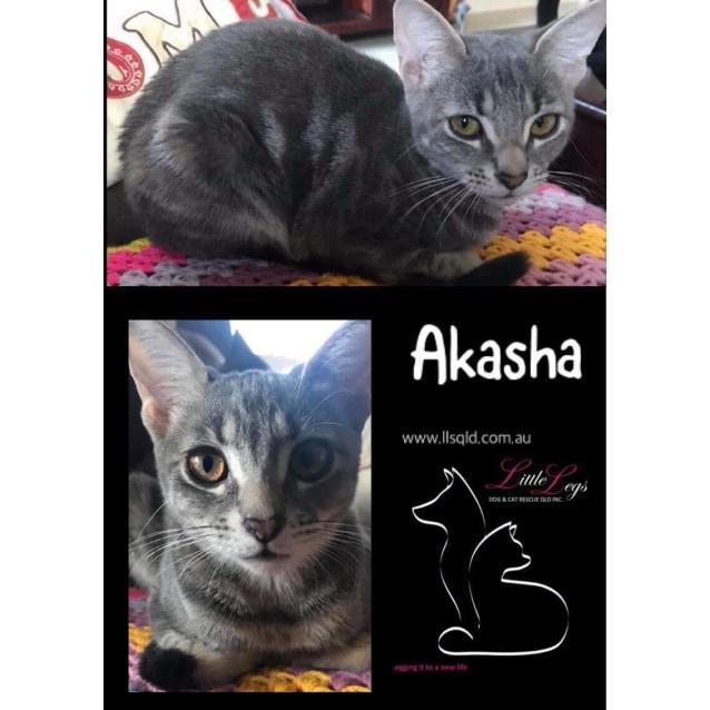 Photo of Akasha