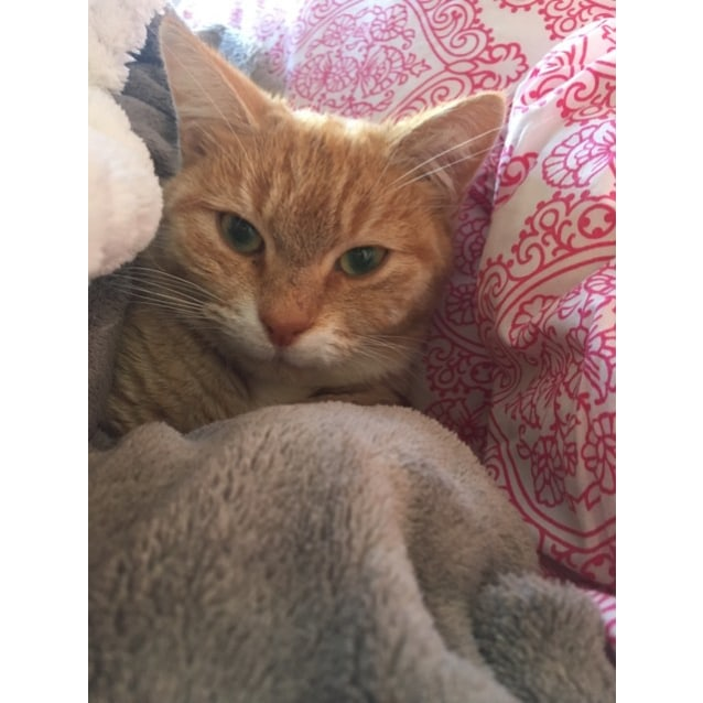 Photo of Almond (Located In St Kilda)