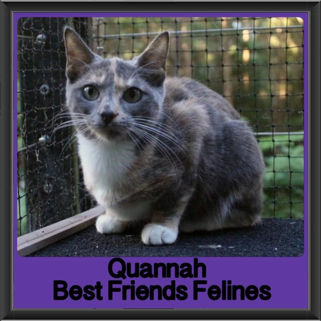 Photo of Quannah