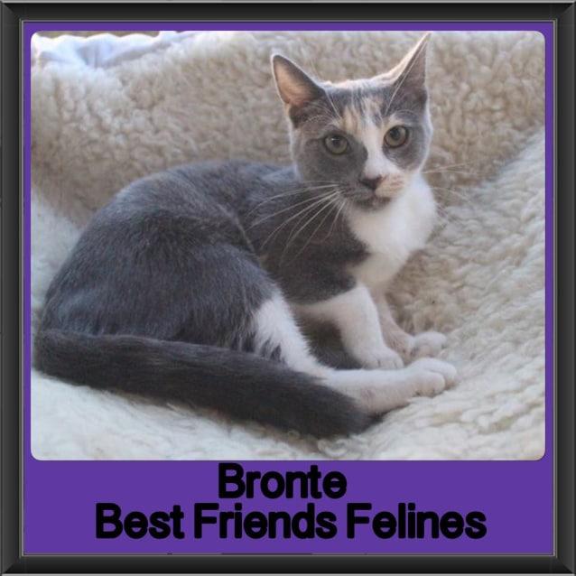Photo of Bronte