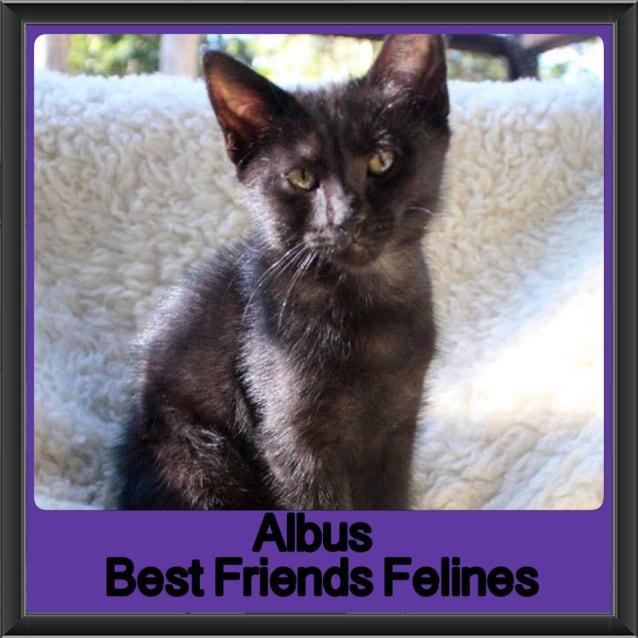 Photo of Albus