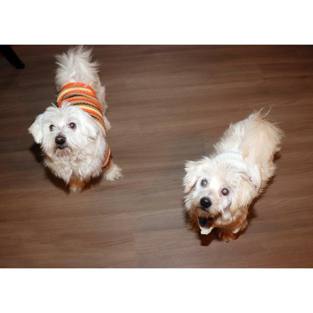 Photo of Buddy & Milly