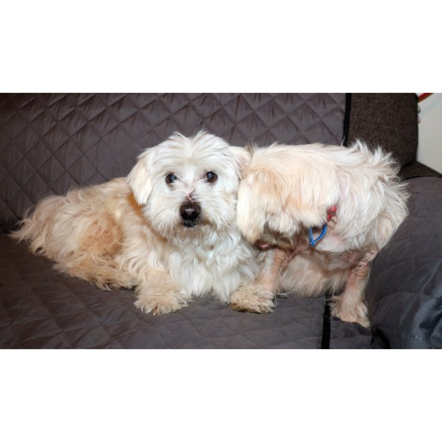 Photo of  Milly & Buddy