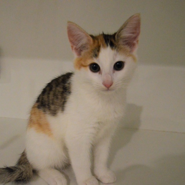 Photo of Mystic ~Rainbow Cat Rescue~