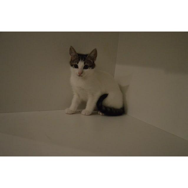 Photo of Tweetie Pie ~Rainbow Cat Rescue~