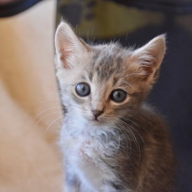 Photo of Ginny   C3262   Adoption Pending