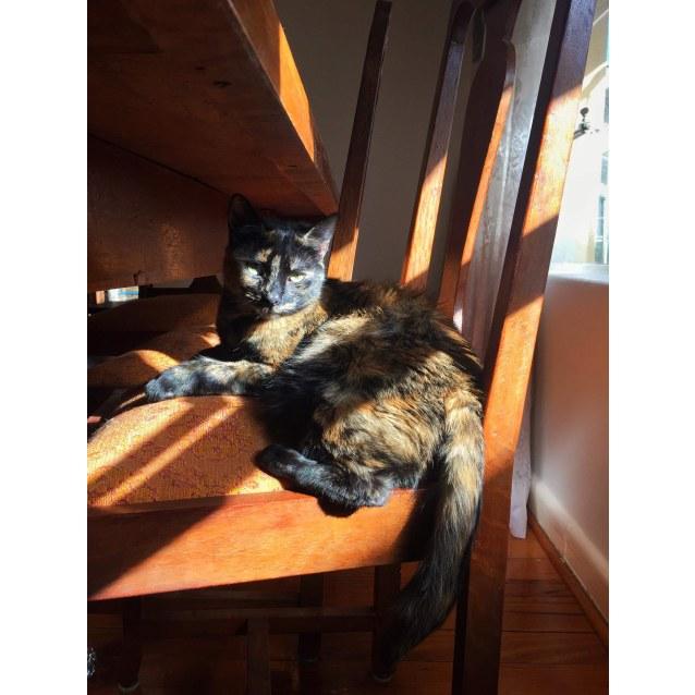 Photo of Charlize (Located In Preston)