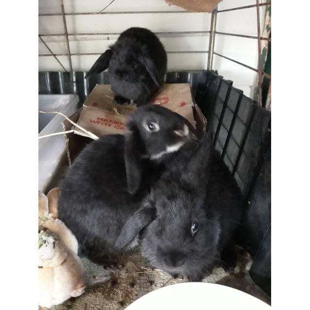Photo of Audrey, Douglas & Errol