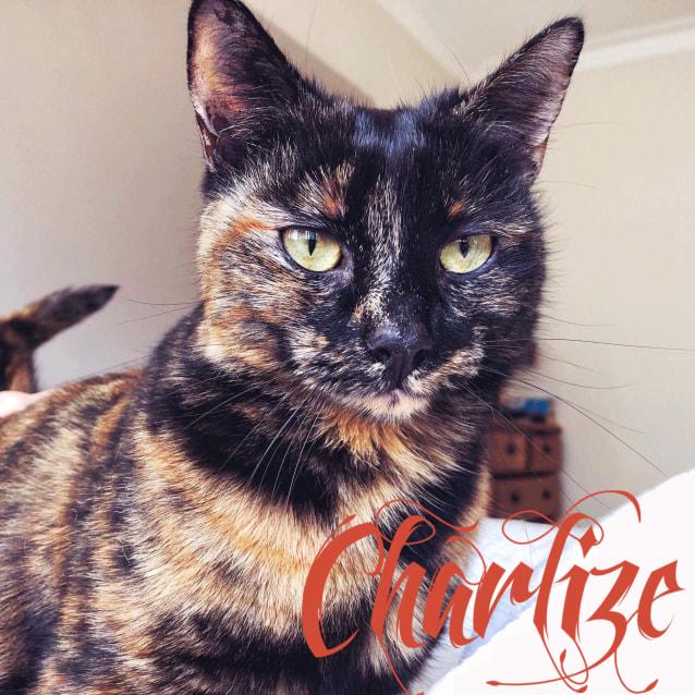 Photo of Charlize   Located In Preston