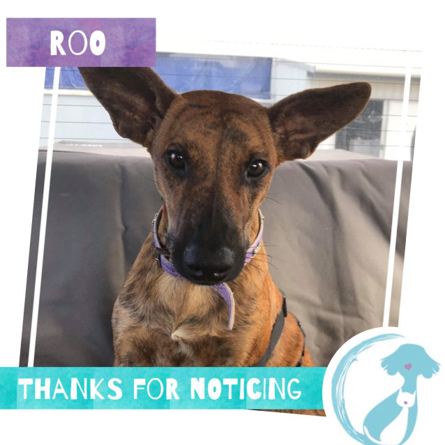 Photo of Roo