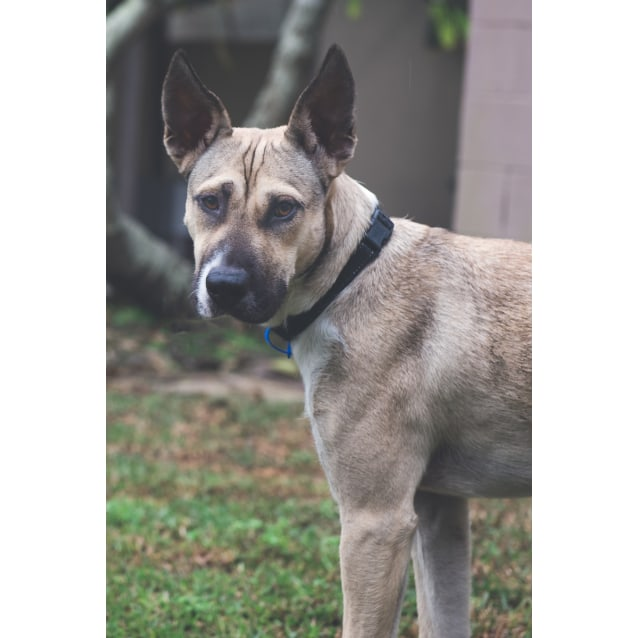 Photo of Molly ~ 1 Year Old Mixed Breed