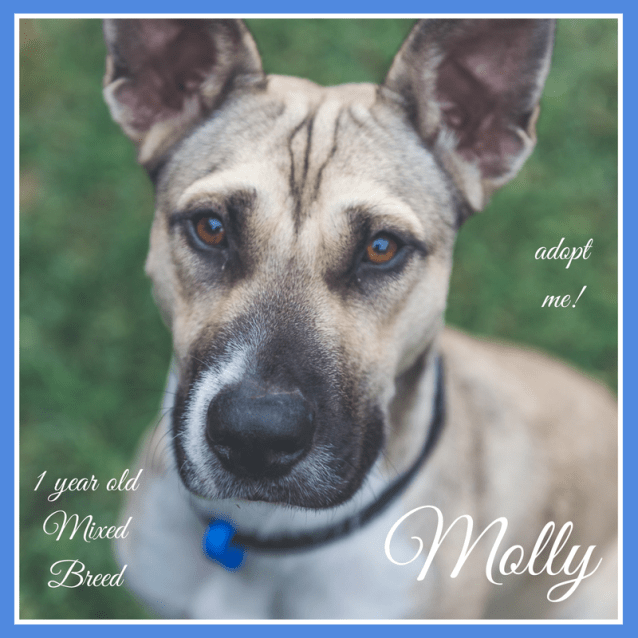 Photo of Molly ~ Mixed Breed (On Trial 8/7/2018)