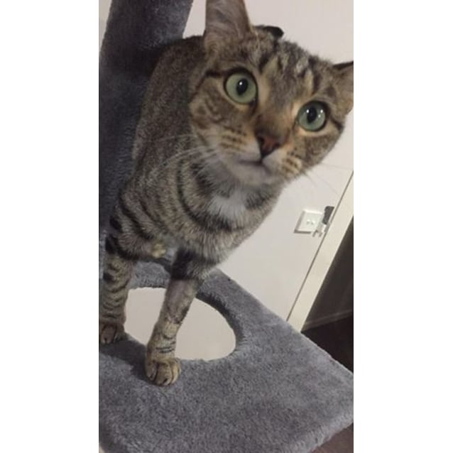 Photo of Pusscat