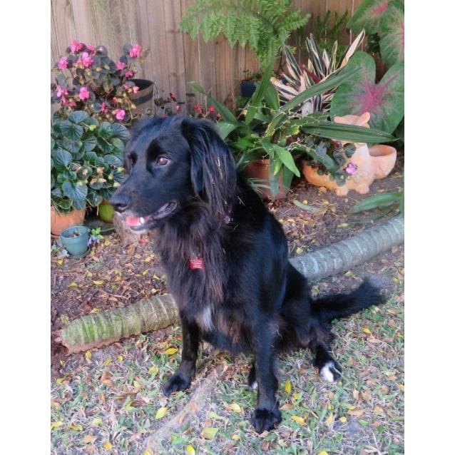Photo of Sage (Adoption Pending)