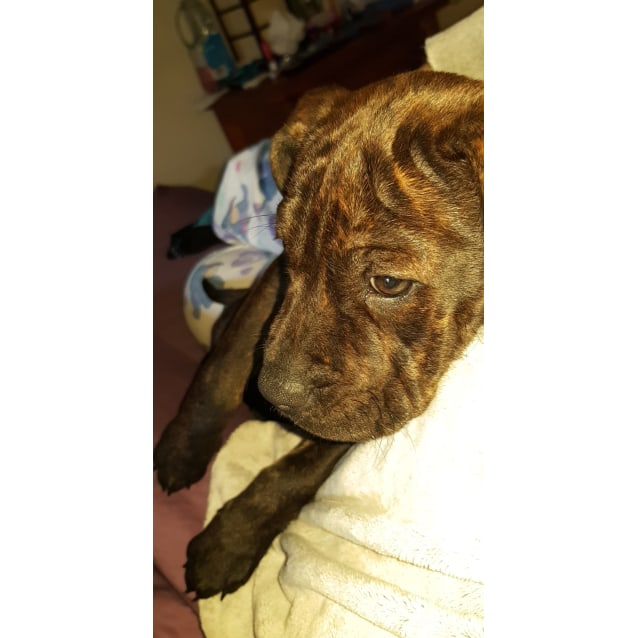 Photo of Yumi A Confident Puppy