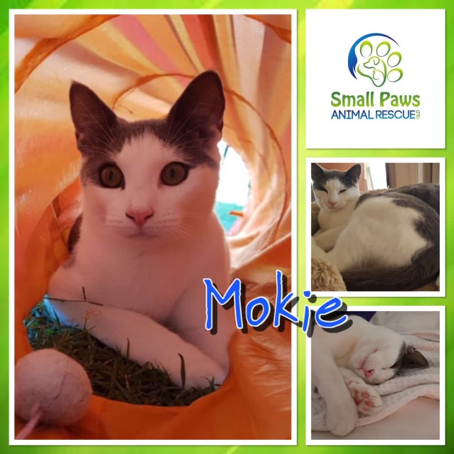Photo of Mokie