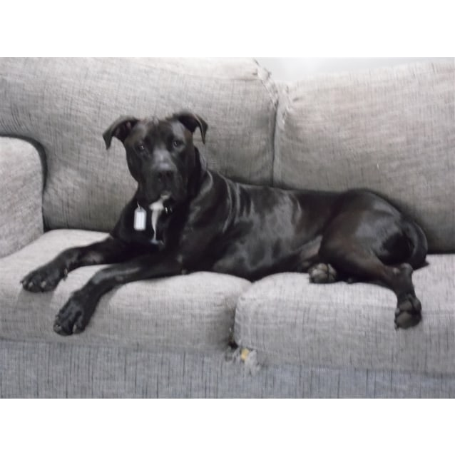 Photo of Benson