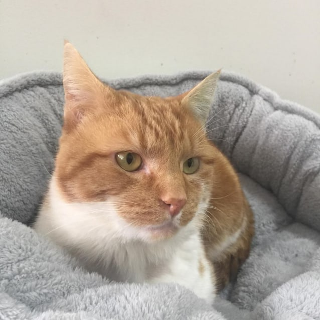 Photo of Cheddar   Located In Bulleen
