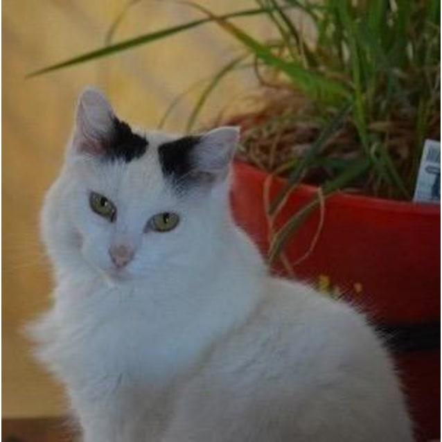 Photo of Minty   C3295