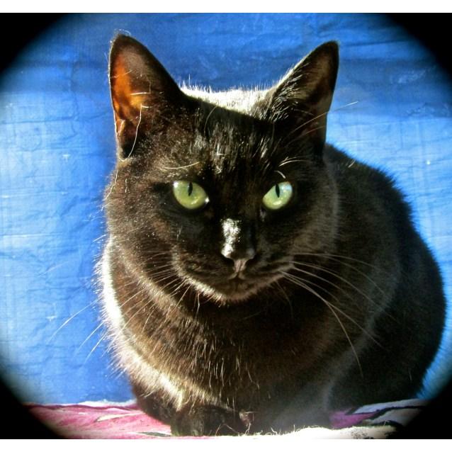 Photo of Jedda