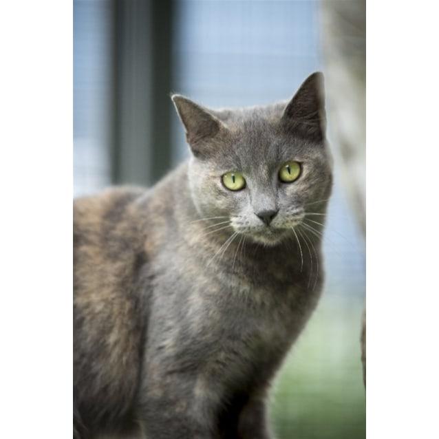 Photo of Lila