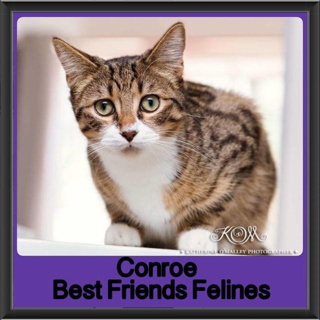 Photo of Conroe