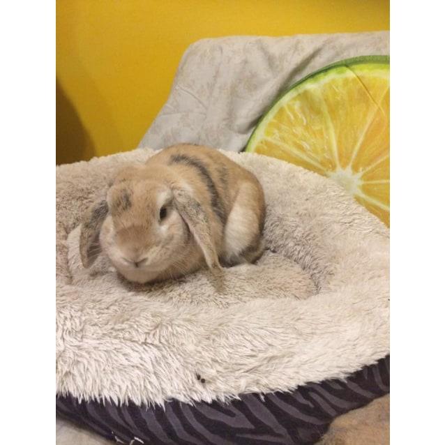 Photo of Munny Bunny