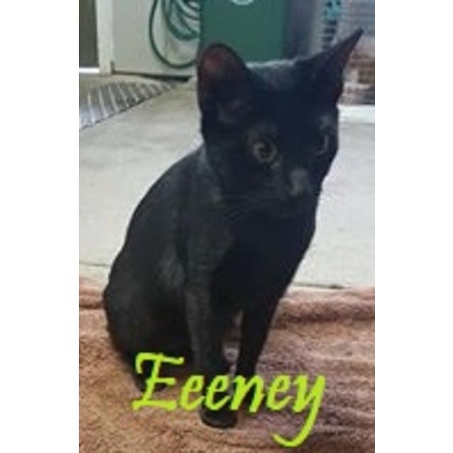 Photo of Eeeney