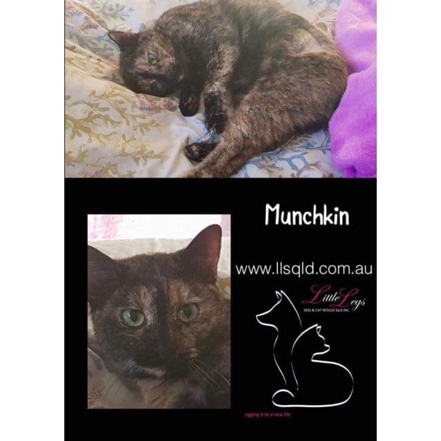 Photo of Munchkin