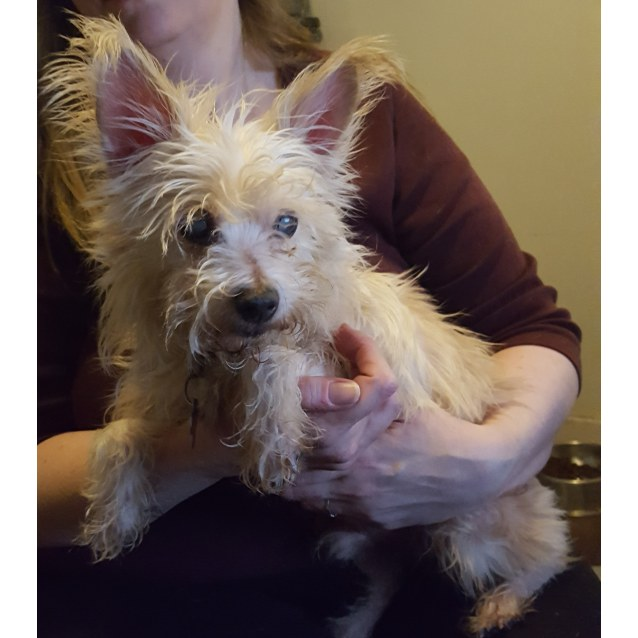 Photo of Sparkles *On Trial With My New Family *