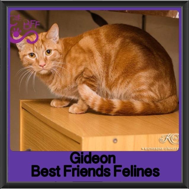 Photo of Gideon