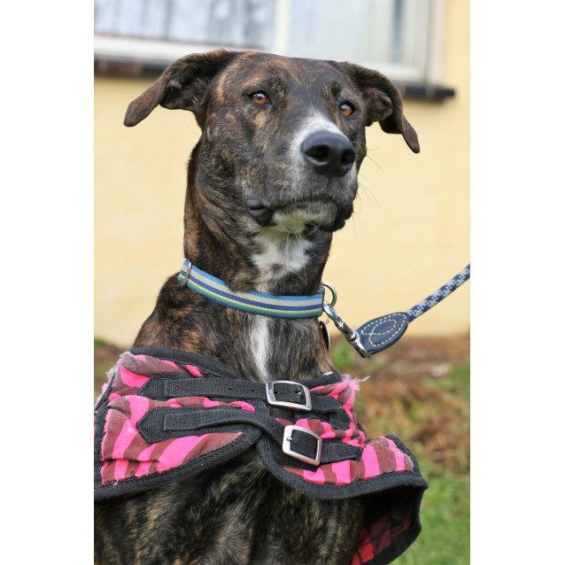 Photo of Zoe The Multicoloured Doggie