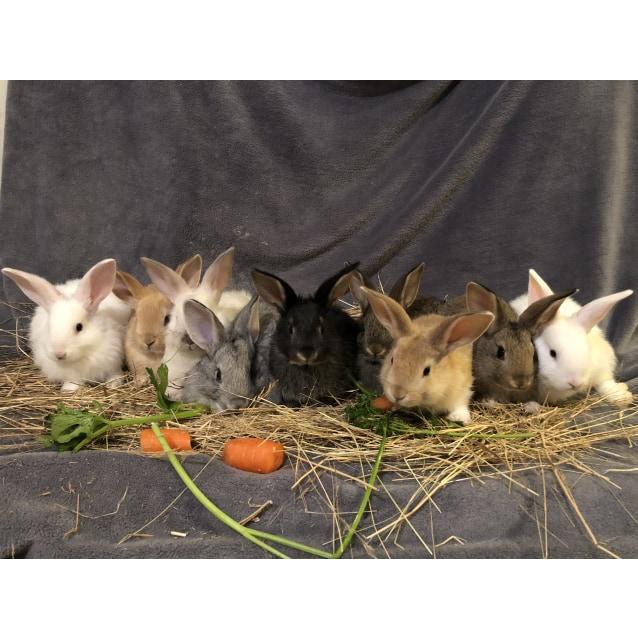 Photo of Baby Rabbits