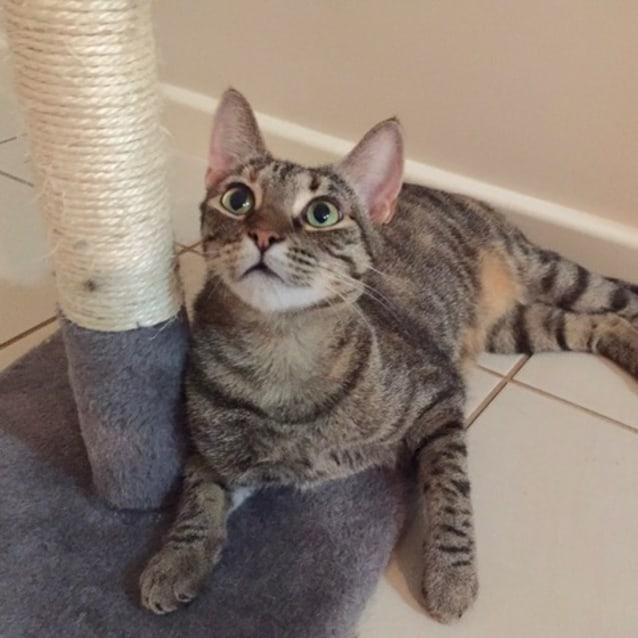 Photo of Clementine (C2607)