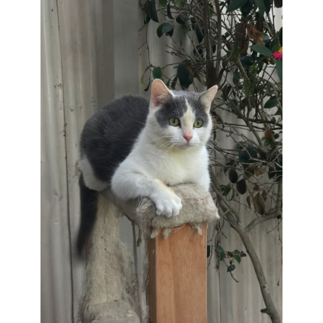 Photo of Sophie (Located In Bentleigh East)