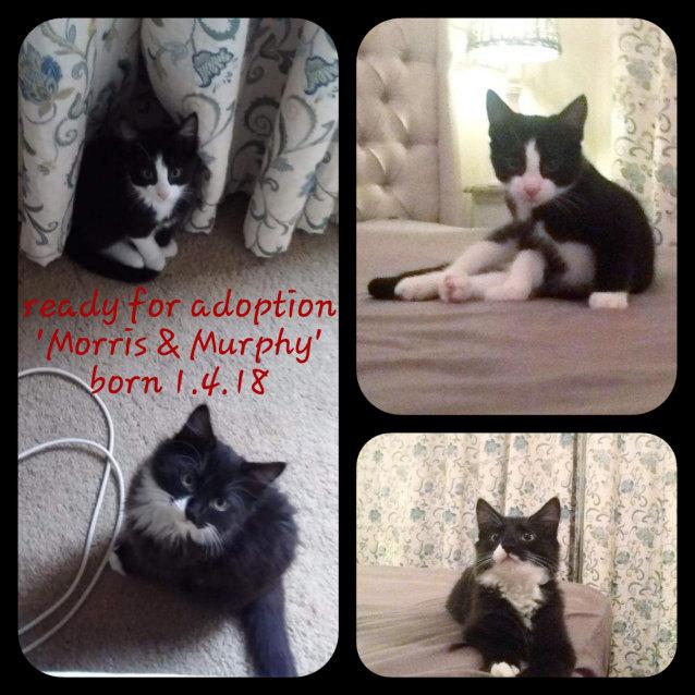Photo of Morris & Murphy