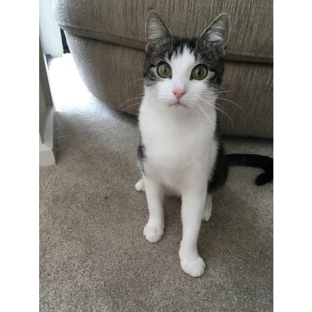 Photo of Faye