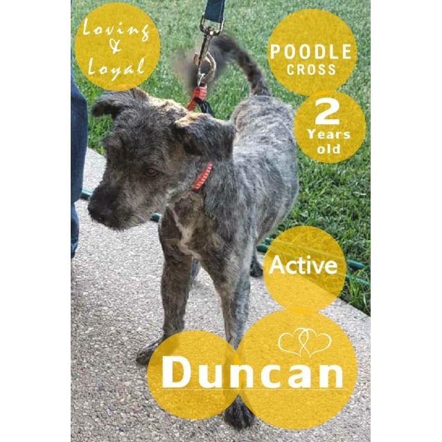 Photo of Duncan