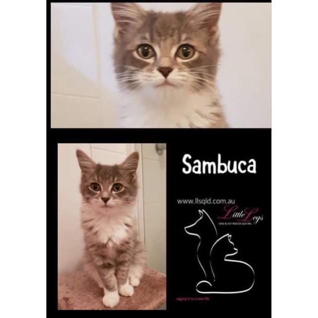 Photo of Sambuca