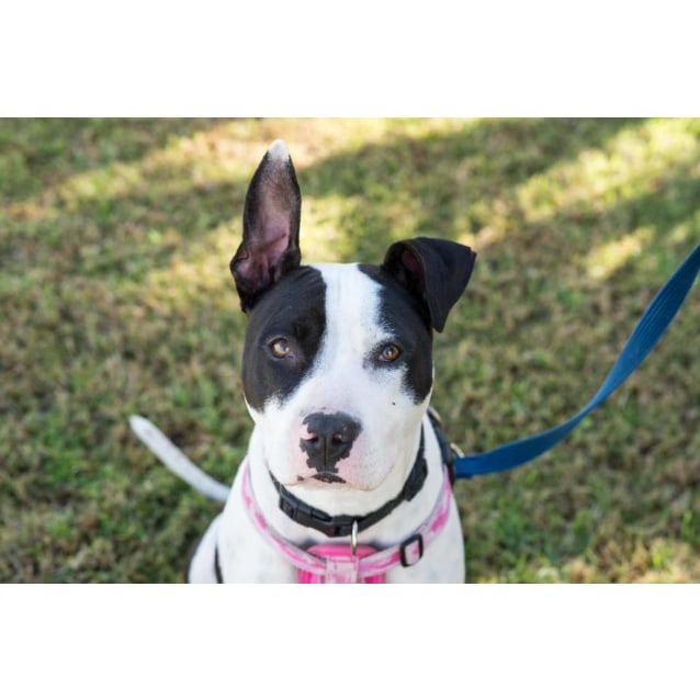 Photo of Becca   Adopt Or Foster Me!