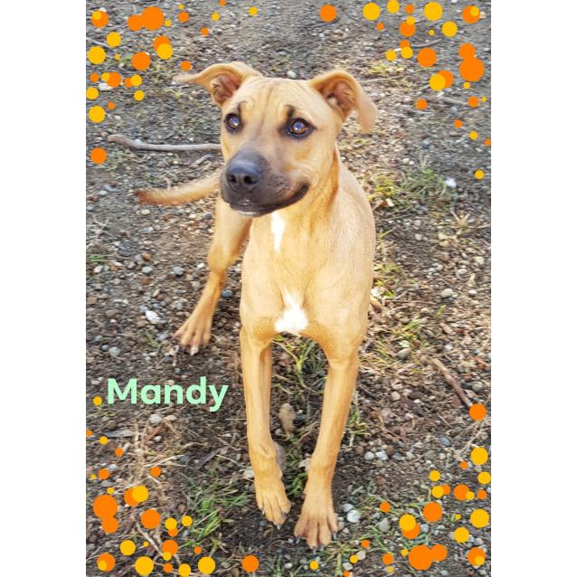 Photo of Mandy (270618)