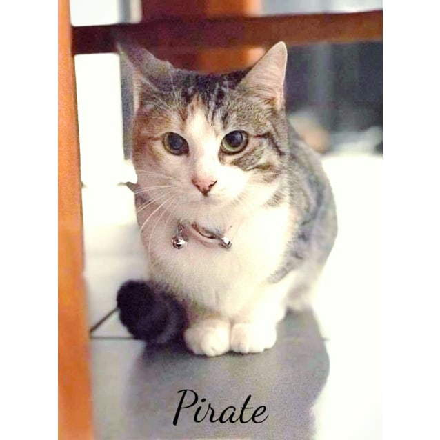 Photo of Pirate   Meet Me At Pets Domain Corio On August 5