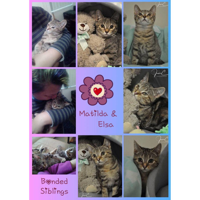 Photo of ❤️sweetheart Elsa❤️2 Is Better Than 1