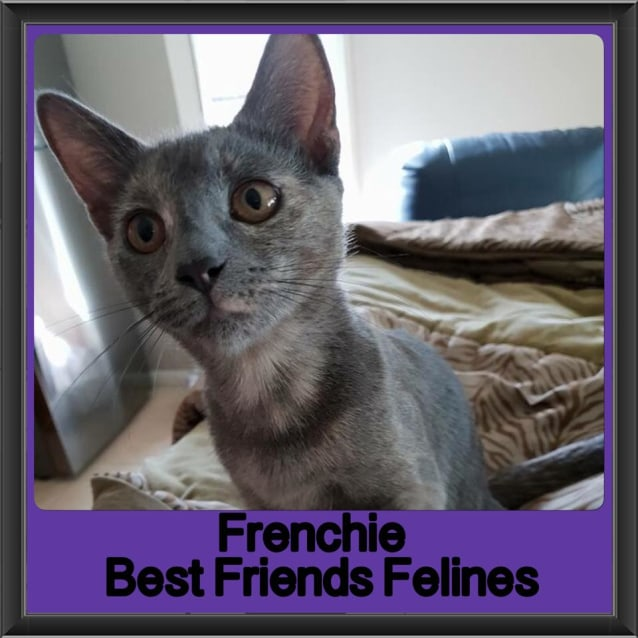 Photo of Frenchie