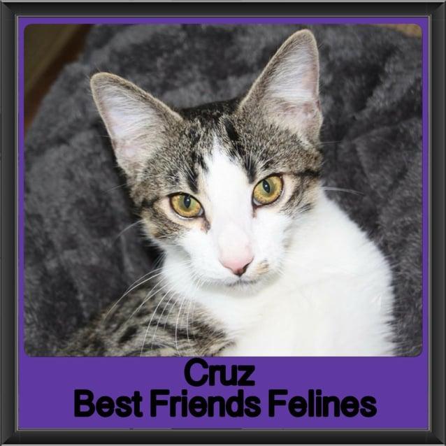 Photo of Cruz