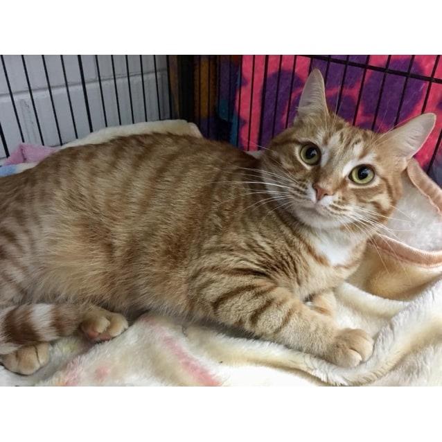 Photo of Mongo