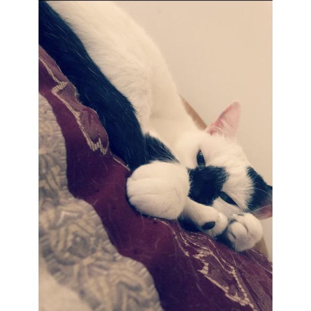 Photo of Snowdrop, The Kid Lovin' Cuddly Cat!