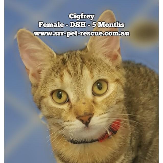 Photo of Cigfrey